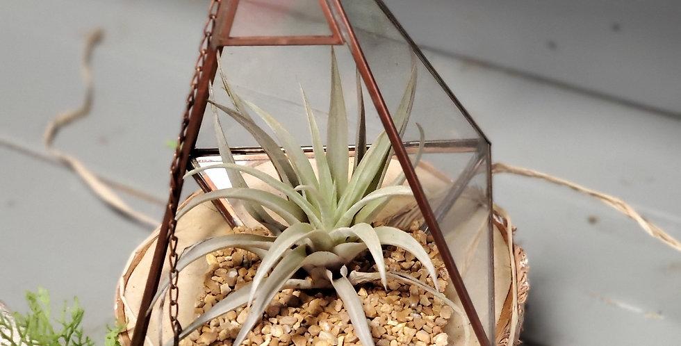 Glass Terrarium with Air Plant