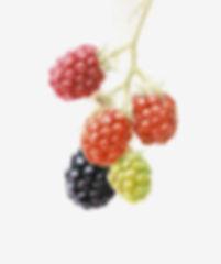 Blackberry 72.jpg
