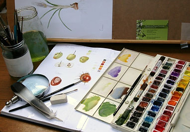 Nature and Botanical Drawing Workshop.JP