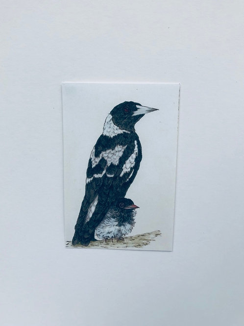 Magpie and chick