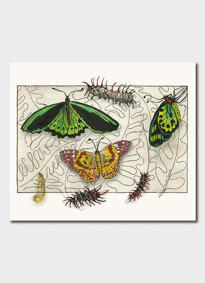 Endangered: Painted Lady Butterfly & Vulnerable: Bird Wing Butterfly