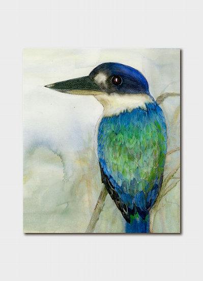 Australian Forest Kingfisher