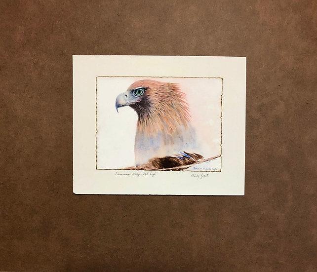 Tasmanian wedge-tail eagle