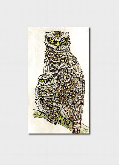 Endangered: Powerful Owl