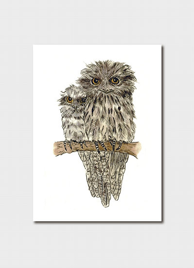 Fledgling Tawny Frogmouth