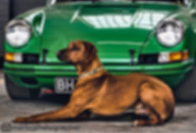 kona-and-porsche - web crop.jpg