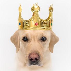 dog-crown-like-king-portrait-close-up-do