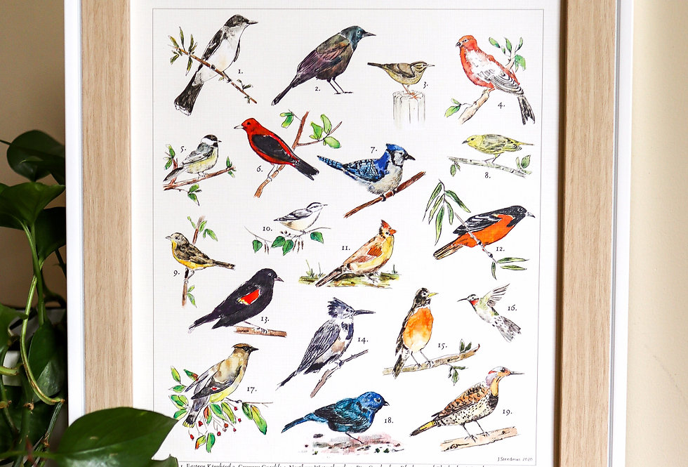 Ontario Backyard Birds Print