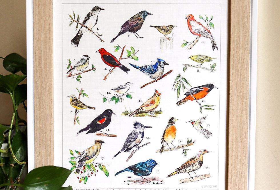 Ontario Backyard Birds Print