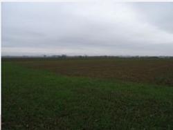 grano verna campo 1