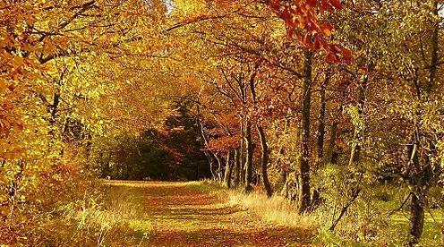 紅葉並木2.jpg