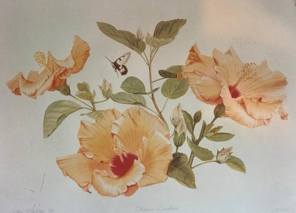 Hamilton Island Hibiscus