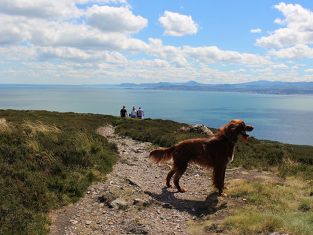 Howth: In the Heart of the Dublin Bay Biosphere