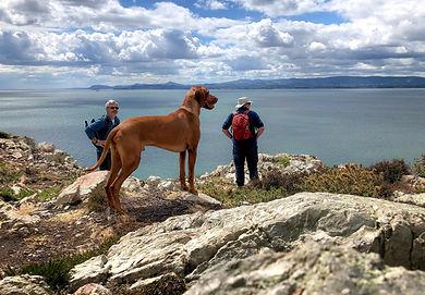 Howth Cliff Path Walk