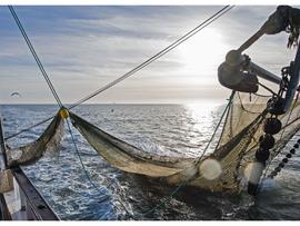 New Fishing Regulation Hampers Local Fishermen