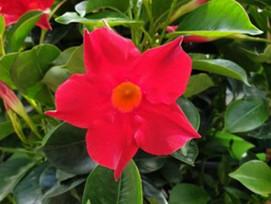 Landscape Plant of the Month
