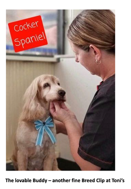 The Importance of Regular Grooming for Your Dogs