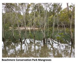 Beachmere Conservation Park: Hidden Beauty
