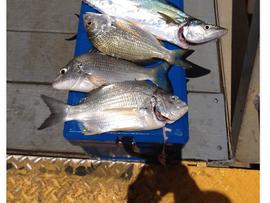 Fishing Report December 20