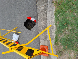 RESIDENTS NARROWLY AVOID CHRISTMAS SINKHOLE IN BEACHMERE.