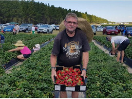 Local community helps our local strawberry farmers last week end and also got a bargain!