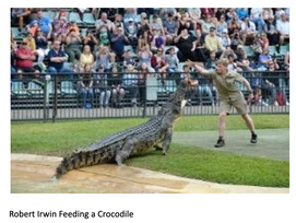 Australia Zoo worth another look 50 years on