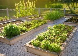 Let's get plantingand organising!