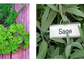 Bulbs & Herbs: Variety and Versatility