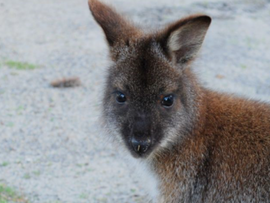 Slow down and care for Bribie's wildlife