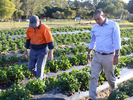HARVEST TRAIL SERVICES COLLABORATION TRIAL TO HELP AUSTRALIAN FARMS