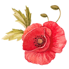 Poppy%20with%20Leaves_edited.png