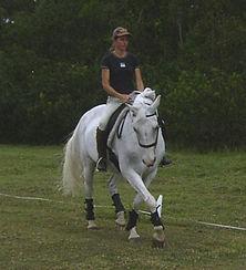 horse training gippsland