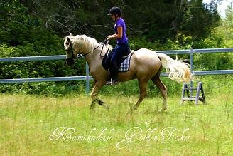 Natural horsemanship bairnsdale