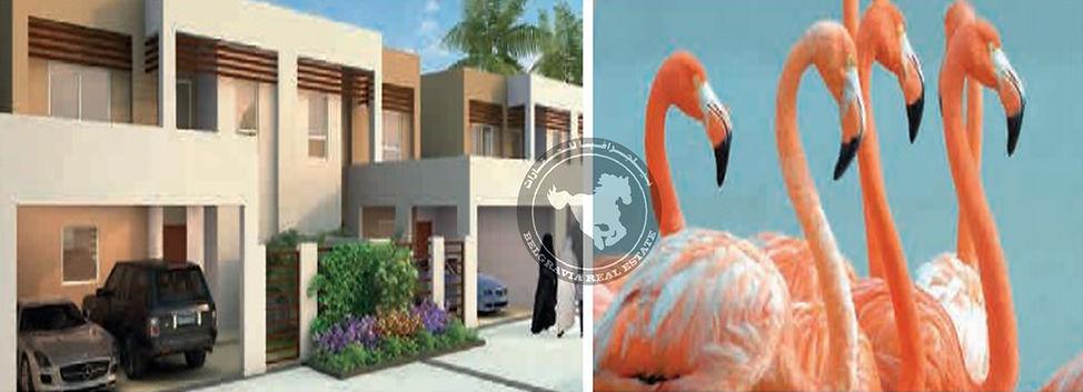 Belgravia Rel Estae | Flamingo | Mina Al Arab