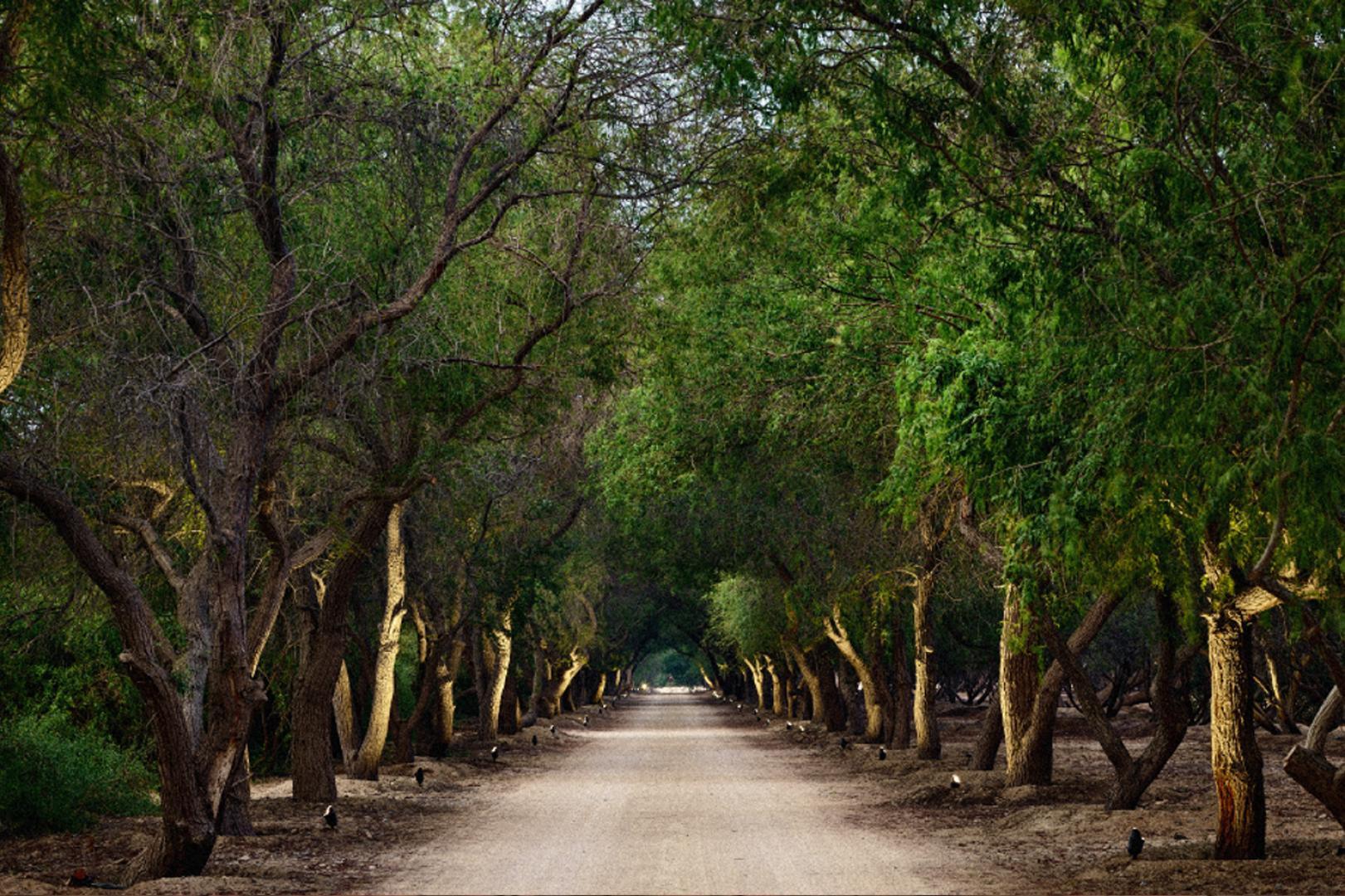 al-jurf-garden-abu-dhabi-nature-tress