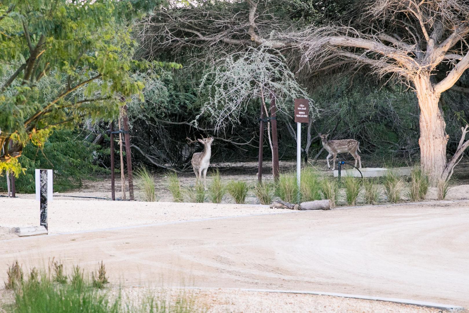 al-jurf-garden-abu-dhabi-wildlife