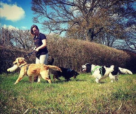 Dog training gun dogs