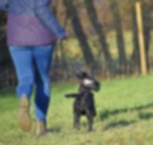 Dog Heel