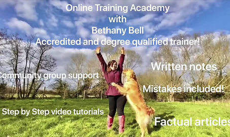 Online dog course