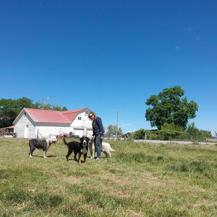 Our Family farm! Mini doodle breeders Idaho