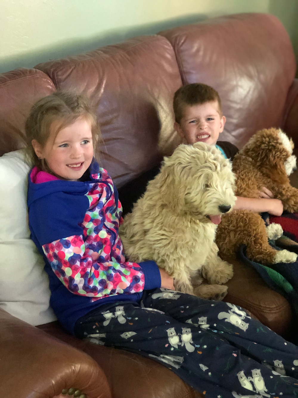 tv time for mini goldendoodle puppy