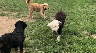 The kids on the farm