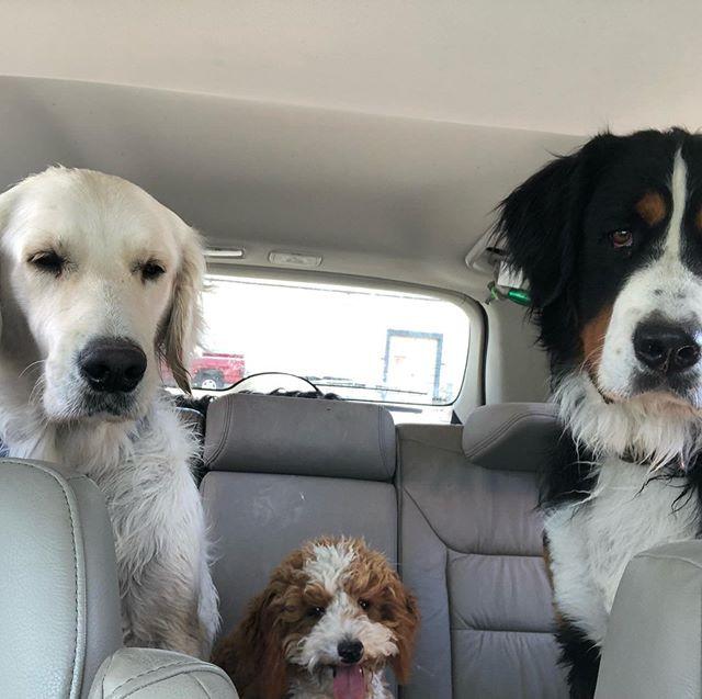 Family of 4 legged