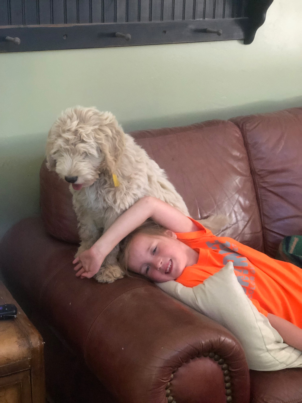mini goldendoodle for sale in Idaho