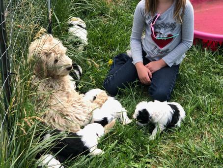 Hypoallergenic Puppy to Hybrid Dog