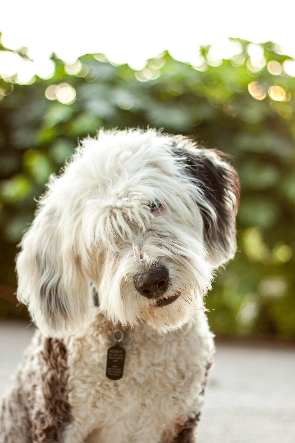 OES Mama to Hypoallergenic Dogs
