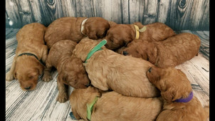 Puppies sounds of cuteness