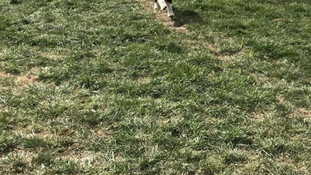 play time at the farm
