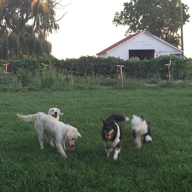 Responsible Breeders dogs