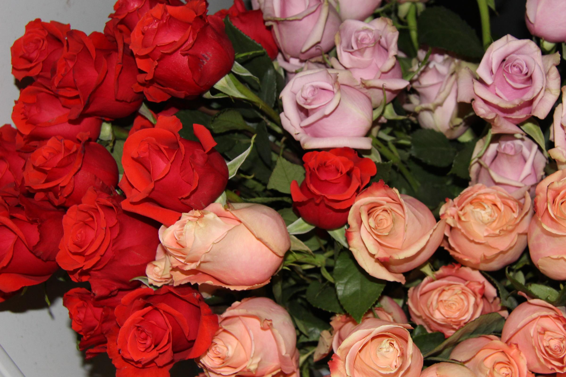 Dark Orange~Pink~Peach Roses